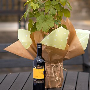 John Lewis Plants - Vine and Wine Gift (Red)