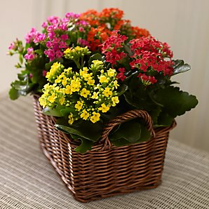 Seasonal Bright Basket